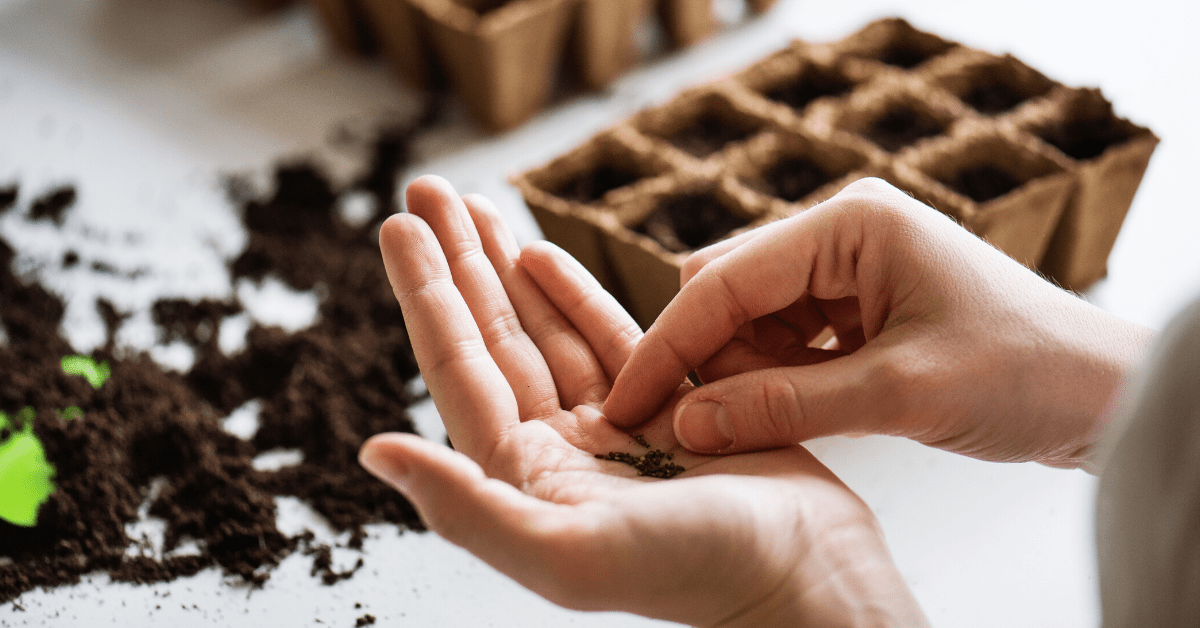 How To Grow Seeds Indoors