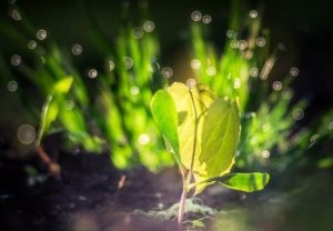 growing green leafy plant under light