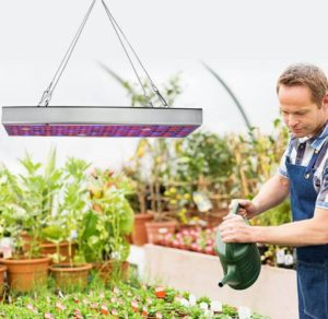 man watering the plants under LED grow lights