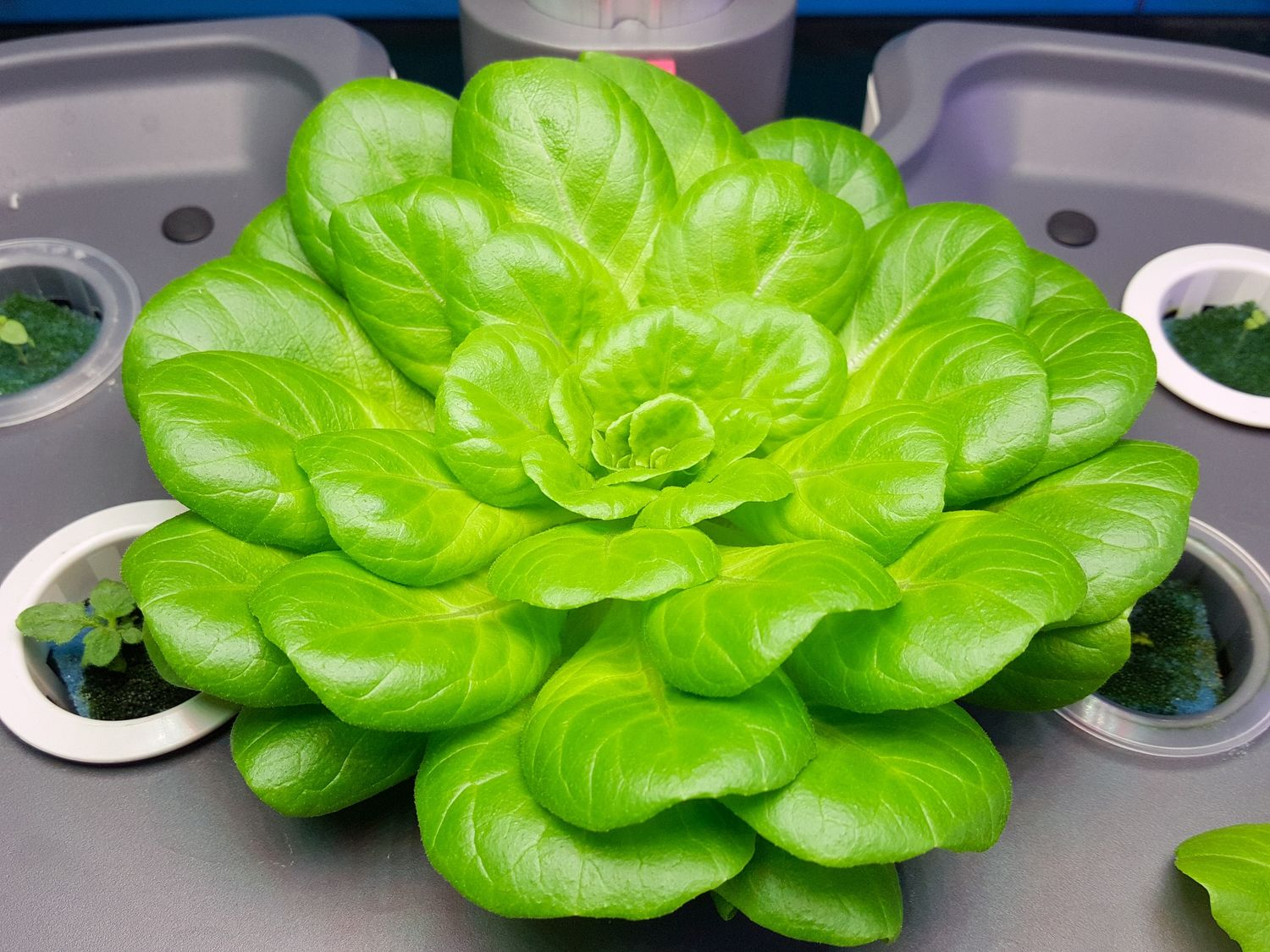 hydroponic systems 2020