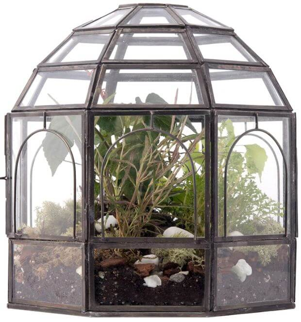 black plant terrarium with plants inside