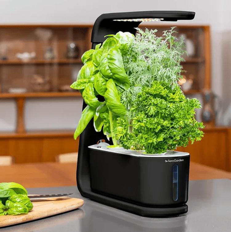 Aerogarden Sprout Review