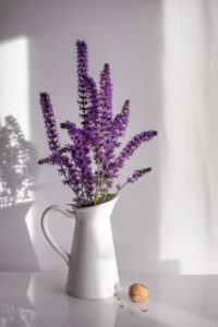 lavender plant indoor with whit vase