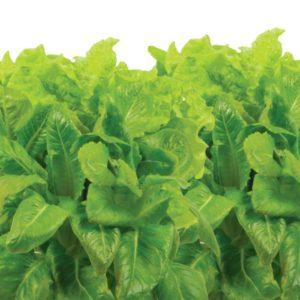 Heirloom Salad Greens AeroGarden - Two Peas