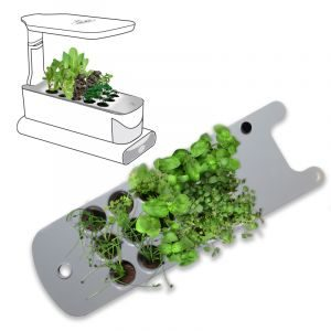 Sprout seed starter pic
