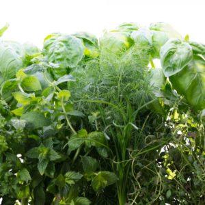 Gourmet Herbs AeroGaren