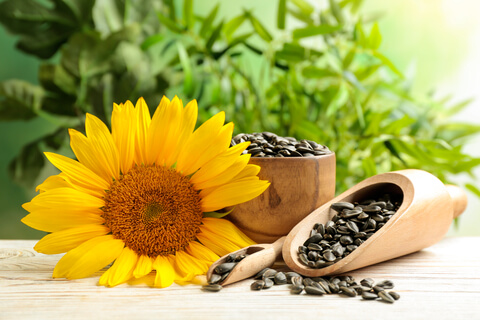 yellow sunflower and harvest seeds