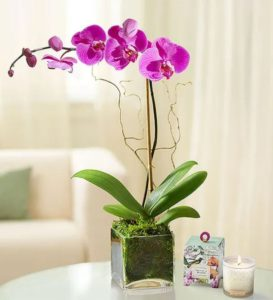 elegant purple orchid in glass square vase with 1800 candle