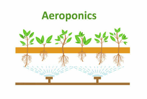 Hydroponics - Aeroponics Illustration