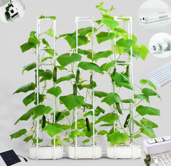 growing plants in big smart hydroponics
