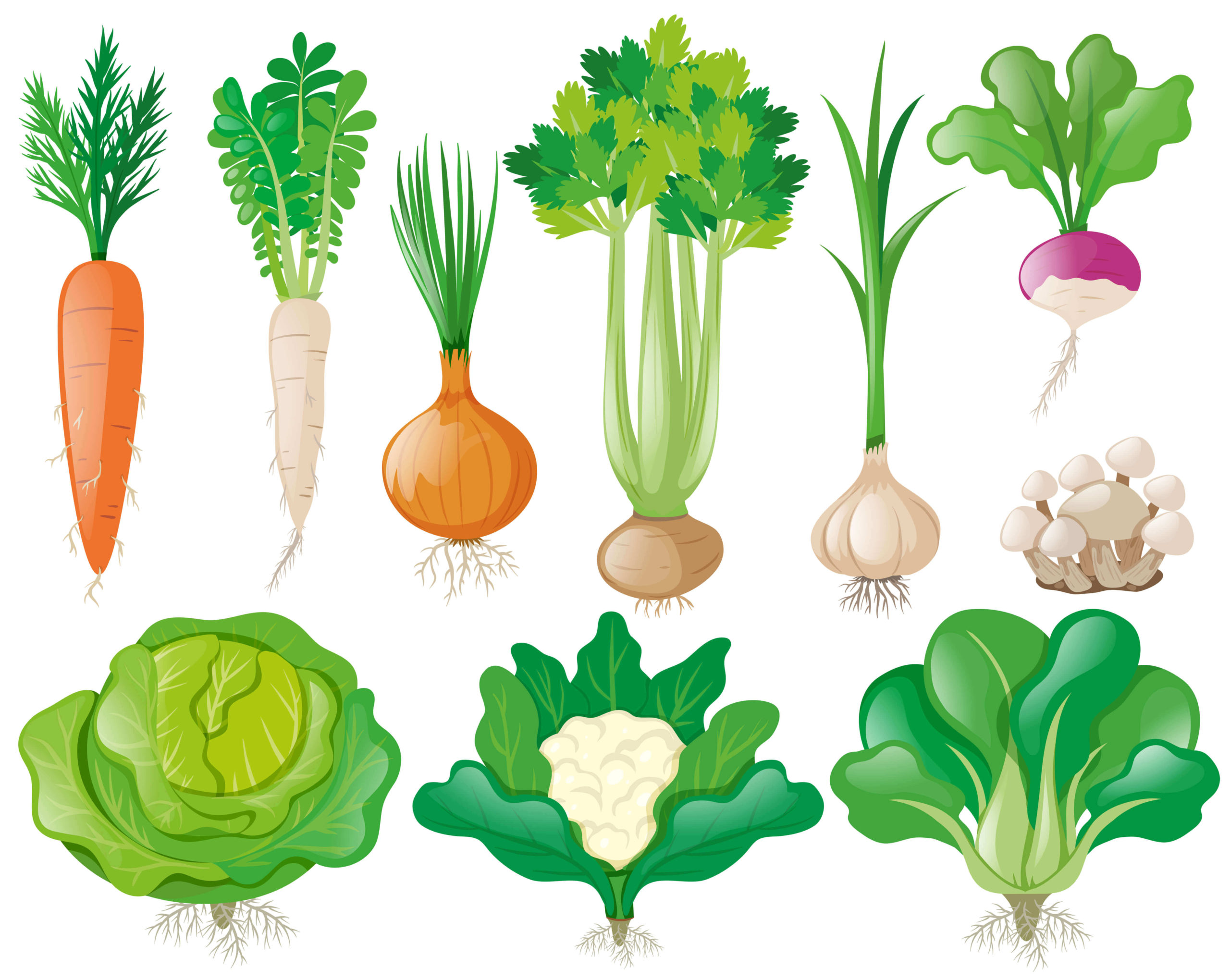 29 Veggies You Can Harvest In A Month