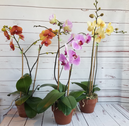 purple orange and yellow orchids in a brown pot