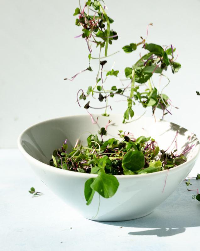white salad microgreens bowl