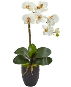white Phalaenopsis Orchid in Black Vase