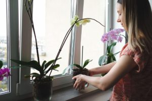 woman arranging orchids plant in the window