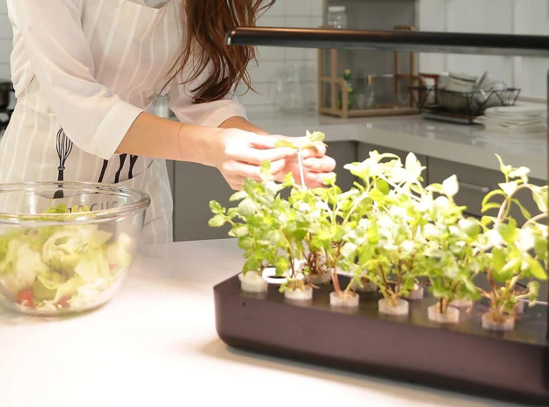 woman picking herbs in black vegebox