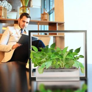 man sitting in couch with vegebox plant