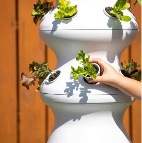 photo of hand picking seedlings in lettuce grow
