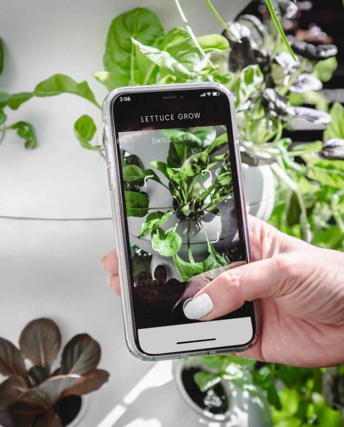 lettuce grow mobile app