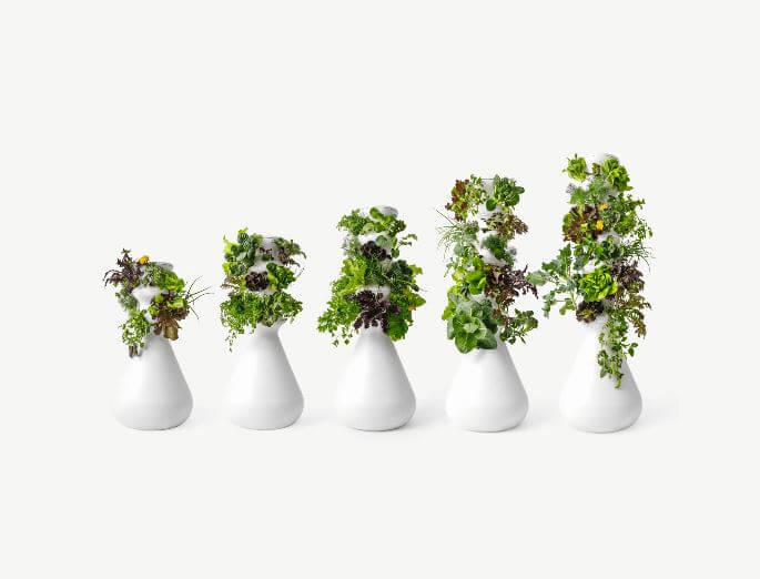 lettuce grow farmstand five sizes