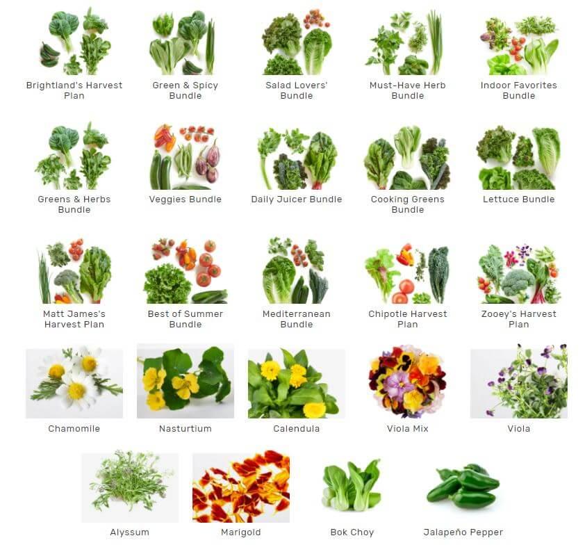 lettuce grow available seedlings
