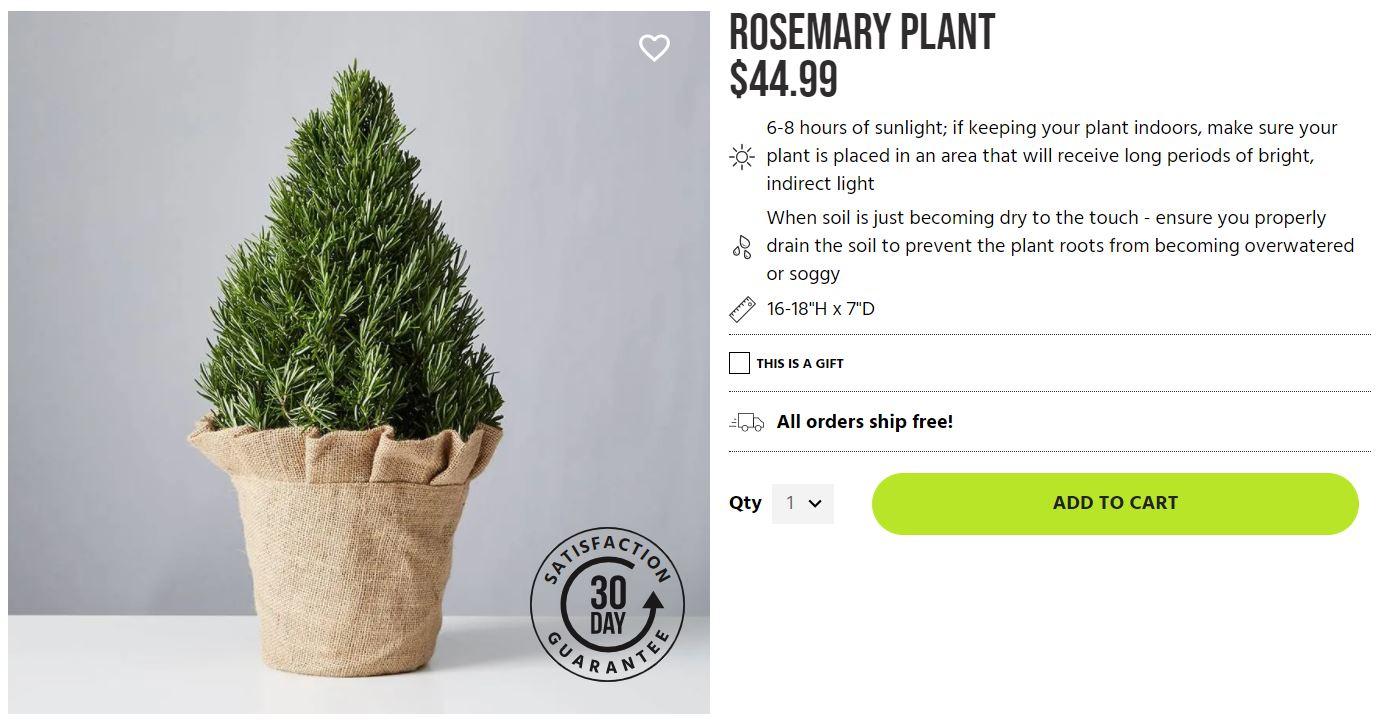 rosemary plant from plants dot com