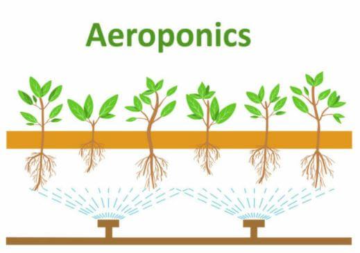 aeroponics illustration