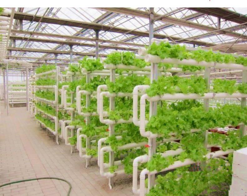 aeroponics system vertical setup farm