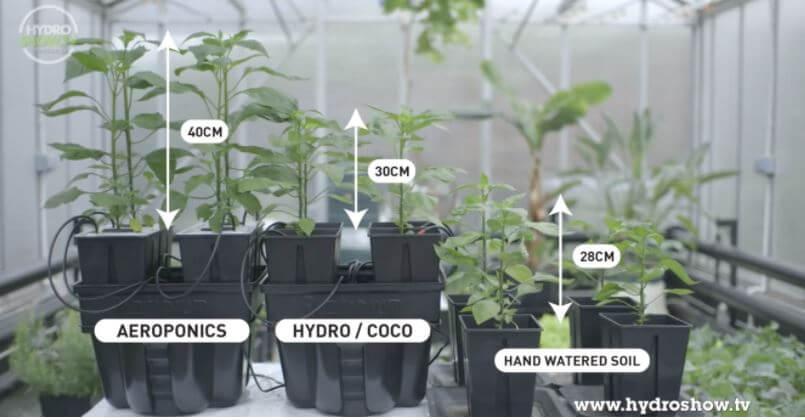 comparison aeroponics hydroponics hand watered