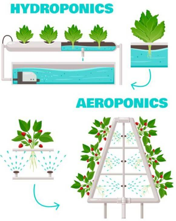 watering system hydroponics vs aeroponics graphic