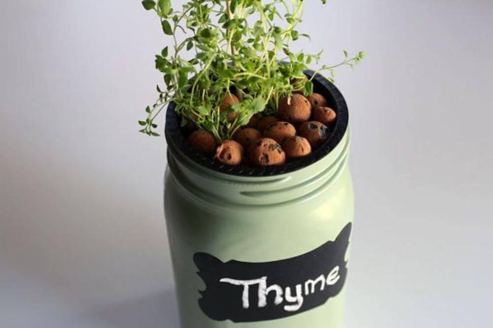 thyme mason jar hydroponics