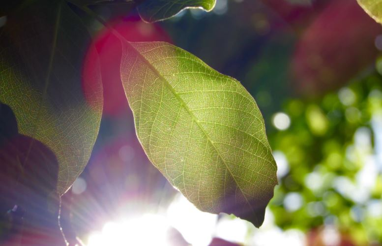 close up of leaves with ray of sunlight
