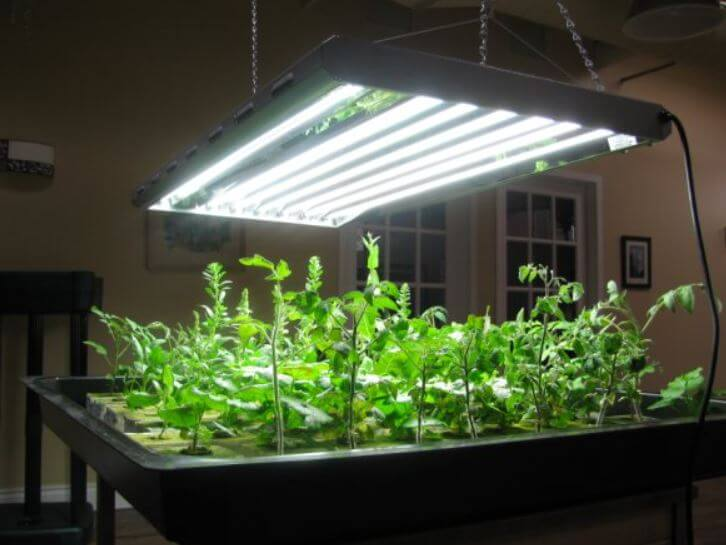 t5 light with plants