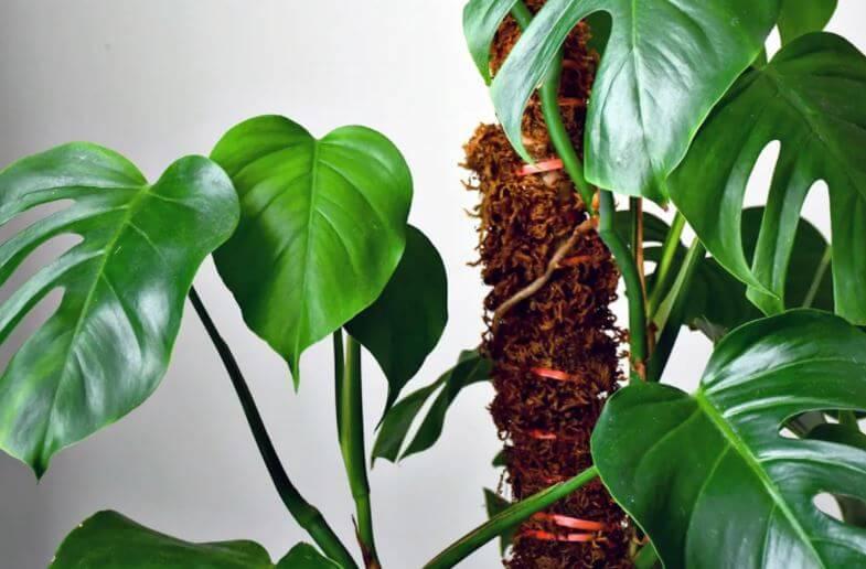moss pole with plants