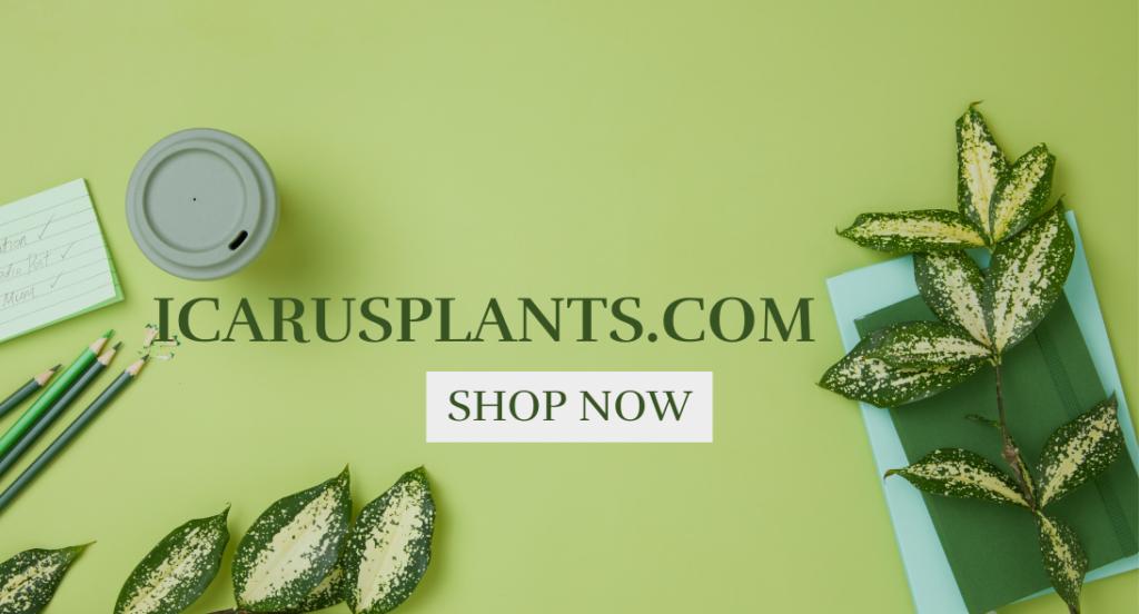 icarus plants discount